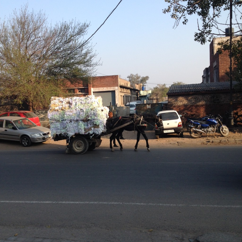 Horse and Cart, Chandigarh